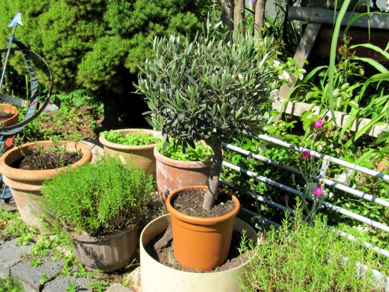 Kosten für Garten